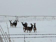 Hansell Farms visitors.